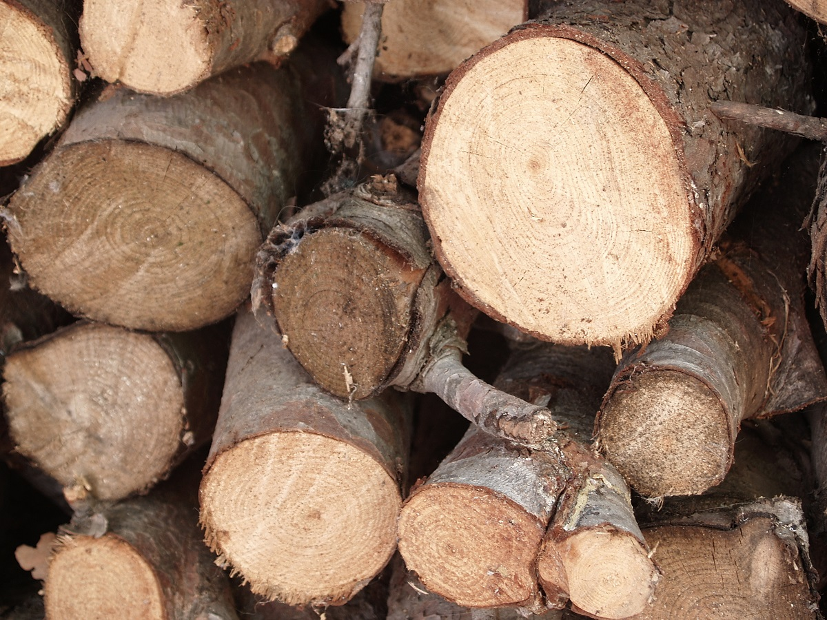 What is the Difference Between Seasoned and Kiln Dried Wood?